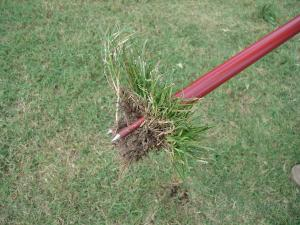 Lift weed from soil with the Turf-Tec WeedAway