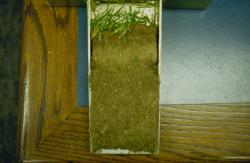 This is a soil profile taken with the Mascaro Profile Sampler of Qualcomm Stadium.  The soil was very hard to support the massive weight of the movable stands that rolled directly across the turfgrass playing surface.